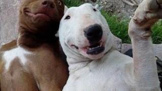【画像】新種エグザイーヌ(犬)と色んな「イーヌ」