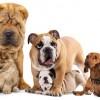 世界一『醜い犬』がぶちゃカワイイと話題<画像>世界で最も醜い犬が決定