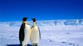 【悲報】南極、割れる