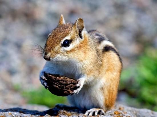 Cute-little-squirrel_1920x1440-600x450