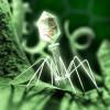 ウイルスとは何か 生物と非生物の境界  / 分子生物学