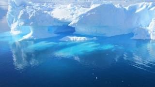 【画像】南極の海の底にいる虫がなんか凄いwwwww
