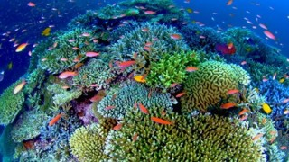 【悲報】沖縄のサンゴ礁が死滅<画像>誰だよこんなことしたの・・・