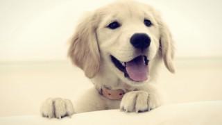 【驚愕】20世紀ロシアで行われていた『犬体実験』をご覧ください →動画像