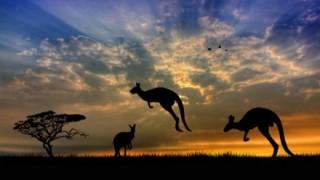 【怖】オーストラリアのヘビwwwwwwwwwwww