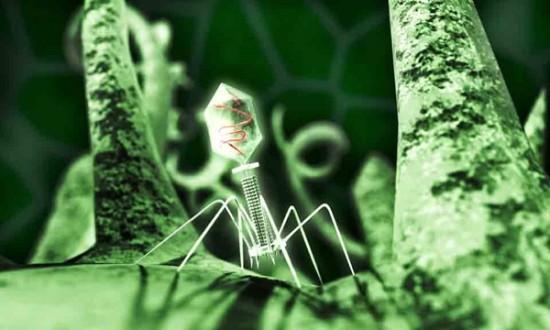 jon-heras-bacteriophage-fix6legs