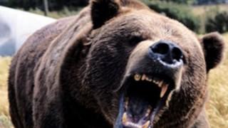【虐待?】痩せ細って犬みたいになってる動物園のクマが話題 →画像