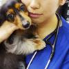 【THE胡散臭い】エロすぎる現役美人獣医Dr.kanaが歌手デビュー<動画像>世間で話題の問題に物申す!