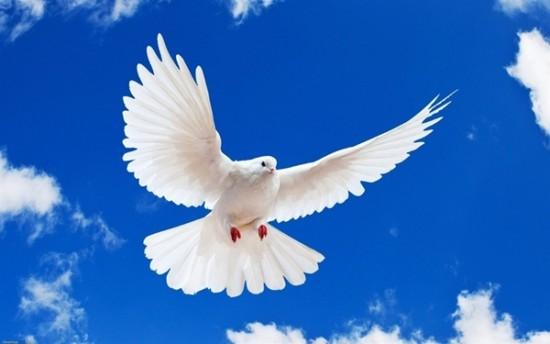 新しいデザイン平和鳩鳥の平和でブルースカイ絵画hoom装飾プリントポスターdiy