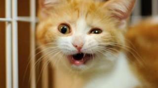 めっちゃ評判になってる『変わった寝相』の猫 ⇒ 画像