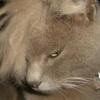【画像】全く癒されないブサネコたち集めたwwwwww