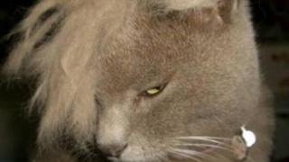 全 く 癒 さ れ な い ブ サ ネ コ た ち の 画 像