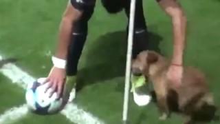 【無邪気】ドリブルで魅せた『イヌ』にサッカー試合後のインタビュー動画