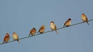 面接官「どうして電線の鳥は感電しないんですか?」俺「…」