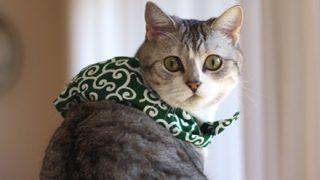 【画像】醤油を注ぐと猫が「ネコ醤油皿」が可愛いと話題に♡