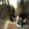 【暴行悲報】暴漢とエレベーターに乗り合わせてしまった少女 →GIFと動画