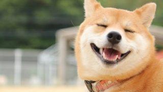 【優しいワンコ】魚を助けようと必死に水をかける犬の動画が話題