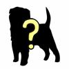 【画像】見る人によって感想が真逆になる『犬の顔』が話題…あなたはどっち?