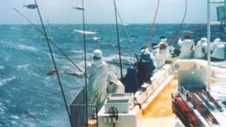 【給与公開】1年間カツオ一本釣り漁船に乗った結果