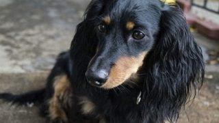 【おそロシア】『呼吸できる液体』ムリヤリ犬を押し込む実験映像に非難殺到 →GIfと動画