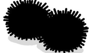 ◆醜い争い◆を繰り広げる『ウニさん達』をご覧ください →画像