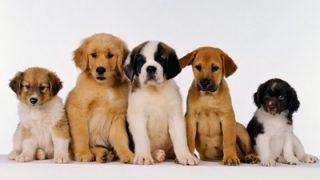 【画像】里親が見つかったイヌの表情ビフォーアフター