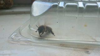 【画像】女王蜂を攫って監禁してたらとんでもない事になったwwwwwww