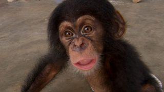 『人間の子供』と『チンパンジーの赤ちゃん』一緒に育てた実験結果wwwwww