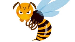 【画像】犬「蜂に刺されたンゴ・・・」