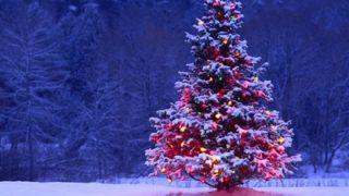 韓国が主張『クリスマスツリーの起源』となった木がコチラです →画像