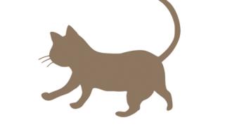 【サビイロネコ】視力は人間の6倍『世界最小』のネコ