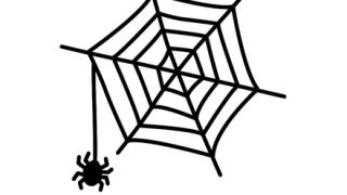 【画像】キラキラど派手な新種の「クモ」が可愛いw