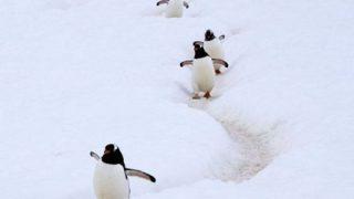 【画像】突然ですが『ペンギンのゆで卵』をご覧ください