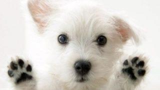 【ま~ん笑】オッパイに亡き愛犬の肉球タトゥー入れた結果 →画像