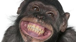 【やっぱ猿じゃん】『ジャングルで最もかっこいいサル』騒動の末路…南ア