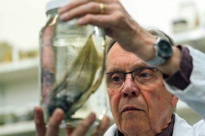 【画像】『世界一醜い生物』ぶよぶよさんの近縁種も捕獲 100種以上が豪深海調査で