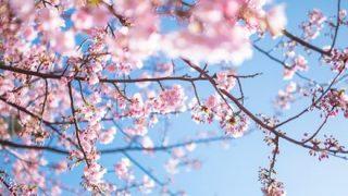 【画像】中国の『桜の風景』スケールがデカ過ぎると話題にwwwwww