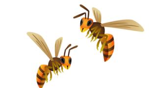 ワイが捕獲したスズメバチ、ギネス記録を超えるw