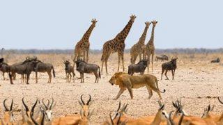 アフリカ大陸が真っ二つに!? 超巨大な亀裂が発見され話題に →画像