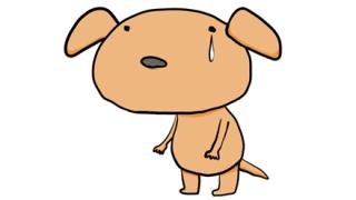 「悲しそう…でもかわいい!」悲しい顔に見えてしまう犬が話題に →画像