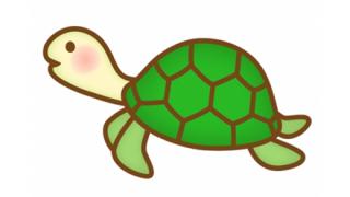 【悲報】生殖器で呼吸し頭部がフサフサの「カクレガメ」が絶滅危惧種に →画像