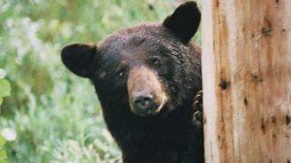 ワイ、日本の『熊の分布図』を見てたまげる・・・