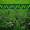 【草生えたw】世界一巨大な草みつかる →画像