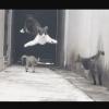 【抗争勃発】このネコ凄いwwwwww