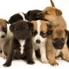 【悲報】『ちんちんと間違えられた子犬』画像が削除されるwwwwwww