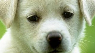 【衝撃の事実が】犬「日本に生まれなければよかった」動物愛護団体のポスターが物議 →画像