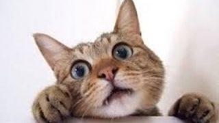 【裏山】子猫ちゃん飼い主のオッパイに挟まれる ⇒画像