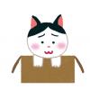 【画像】子猫を拾ってから1ヶ月経った