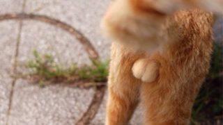 【悲しすぎる表情】猫が去勢された事に気付いて驚くGIf画像