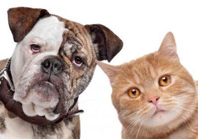【なんて鳴く?】世界各国の人に「イヌとネコ」の声マネをしてもらった結果